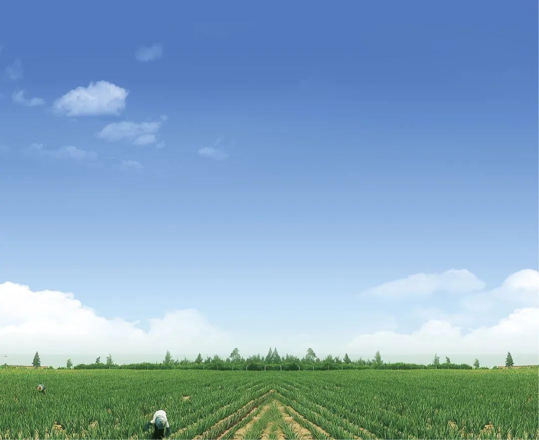美国库拉索芦荟-美国库拉索芦荟价格、图片、排行 - 阿里巴巴