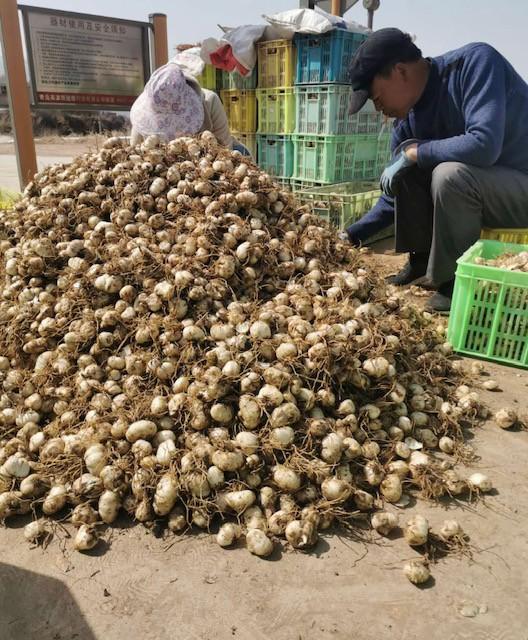 """百万阿姨、宝妈立下""""军令状"""":两天卖光160吨农产品 京东解锁扶贫助农新姿势"""