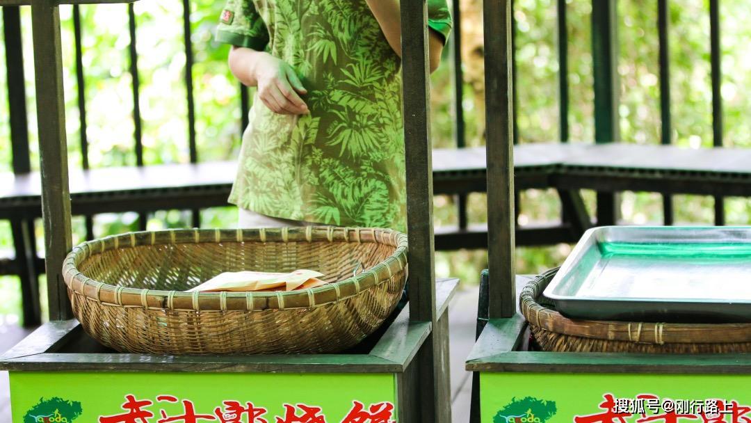原创             海南有一种独特的苦味茶中,春天开始就有新茶,过去人们用来治病