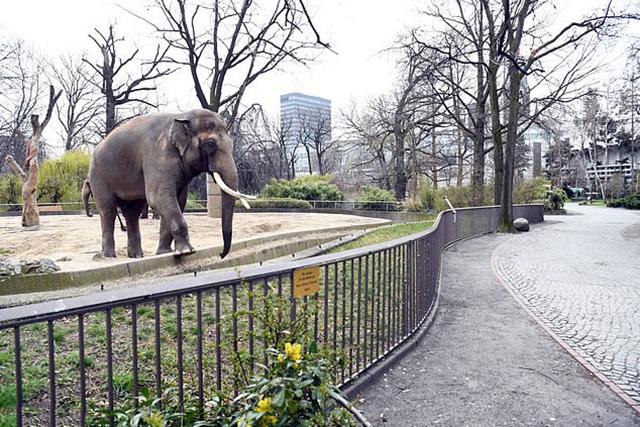 """原创 """"安乐死,用动物喂食动物""""德国动物园或让动物沦为疫情陪葬品"""