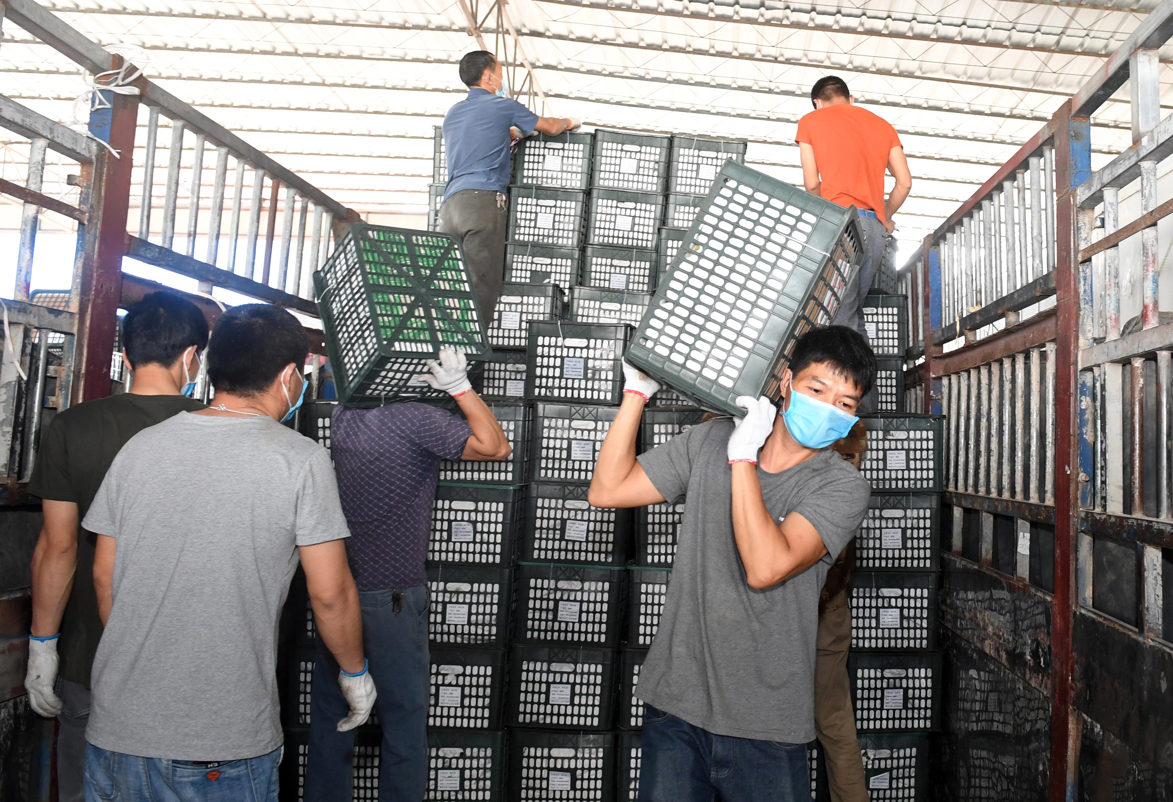 广西凭祥:跨境水果交易忙