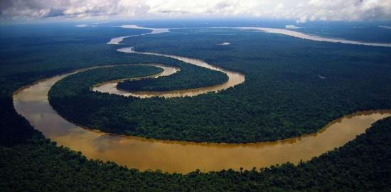 """游走在亚马逊河的""""放电杀手"""", 电压达300–800伏, 鳄鱼都市绕路走"""