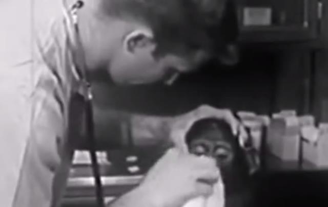 原创 50年前,被人类送上太空的猴子,现如今过的怎样了?