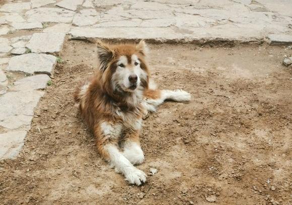 网友捡了只狗,把它给关在家里了,它总是无精打采的