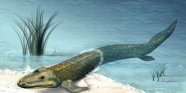 人类在3亿年前是一条鱼,未来,我们会变成什么样 一万年的选择