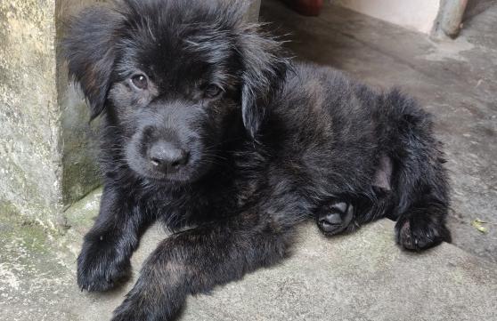网友在路上捡了只黑狗,带回家被朋友看到后,直呼赚了