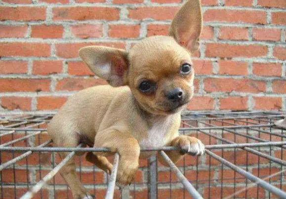 宠物故事:一条狗的生命倒计时,亲爱的主人,请原谅我的食言