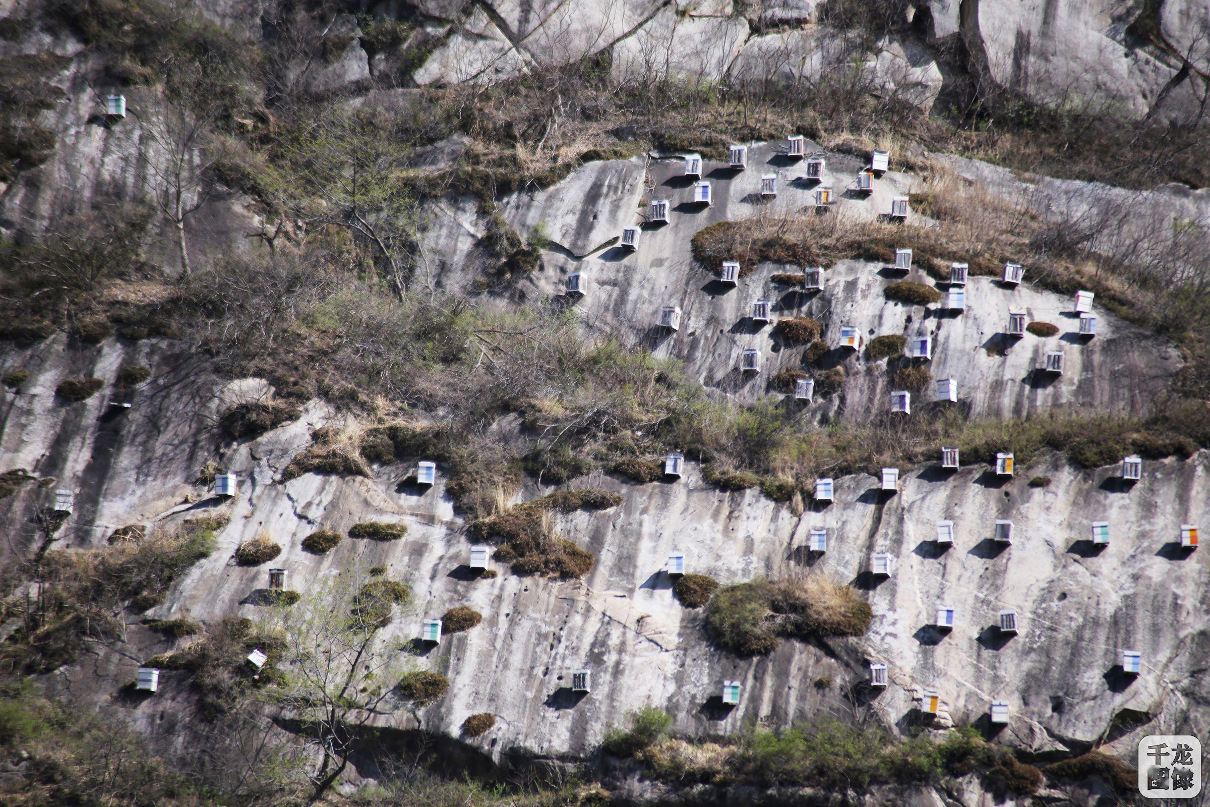 密云将打造悬蜂谷景区游客可赏崖壁养蜂、制作蜂蜡唇膏