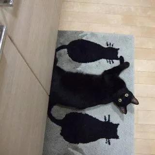 日推上,网友晒出了自家猫咪的躺地照,猫猫隐身的瞬间