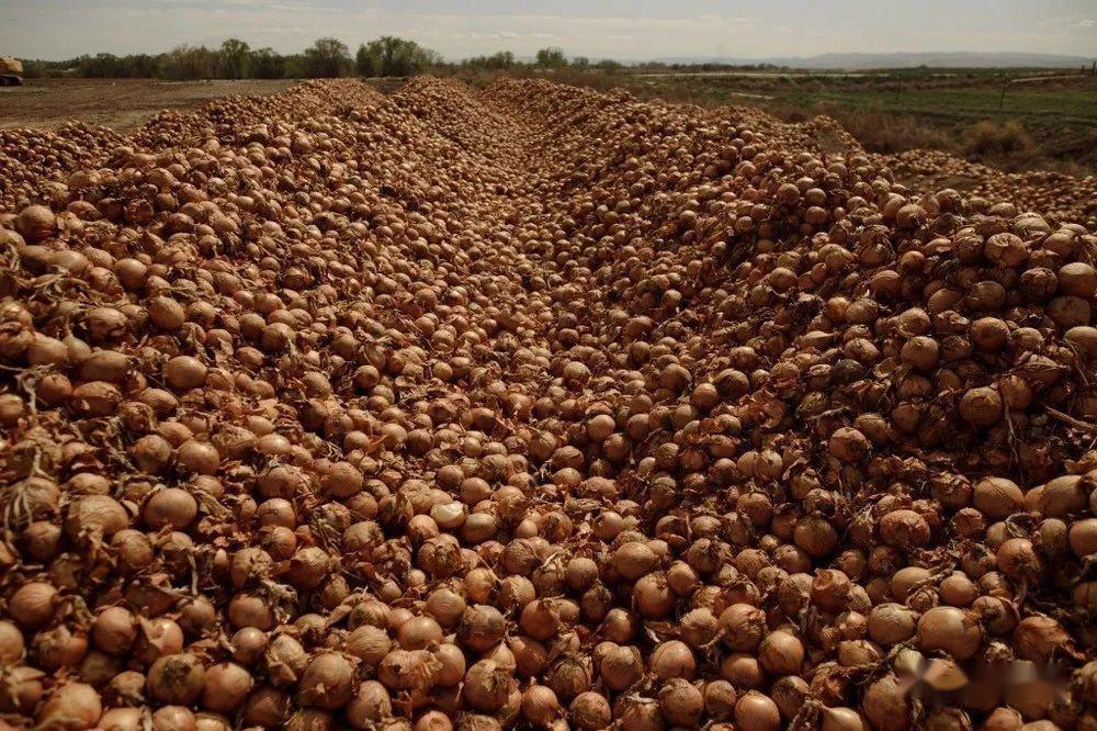 全球2.6亿人挨饿,美国却被逼疯狂倒牛奶、毁蔬菜、弄死猪崽