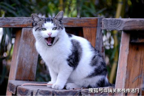 搞笑段子:我失恋了,喊闺蜜出来吃饭,她的一举一动让我很惊讶!