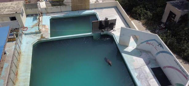 原创 日本一海豚被困废旧水族馆,游泳池里挣扎求生两年,终孤独死去