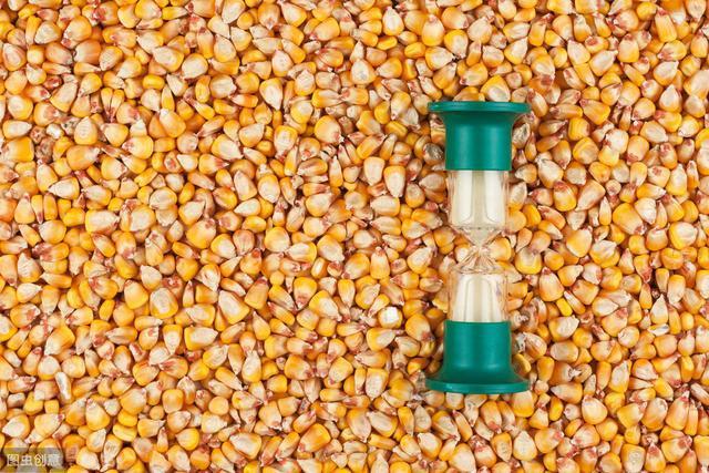 1.1元一斤的玉米不再稀罕。在6月底,它会继续坚挺吗?