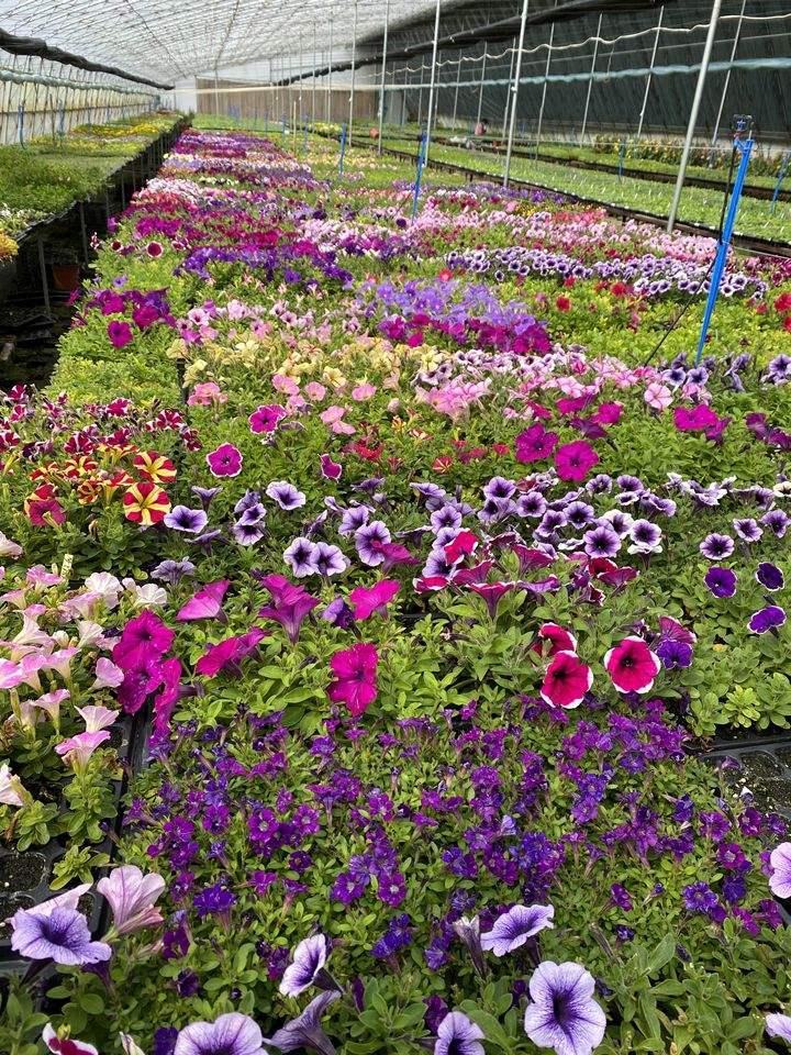 7种新手适合养的花图片