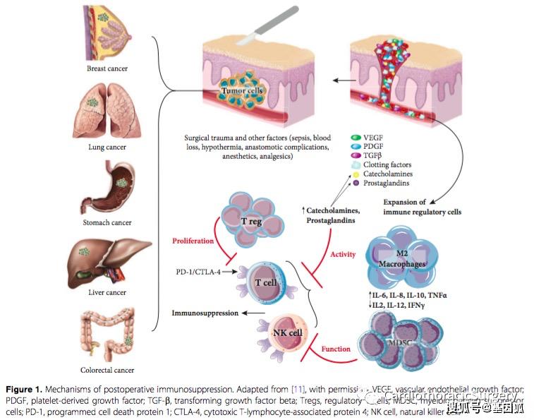 化疗什么原理_化疗是什么过程图解