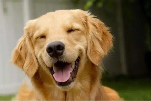 狗狗如果有这几种反应,说明肚子已经装满了寄生虫,主人得注意了