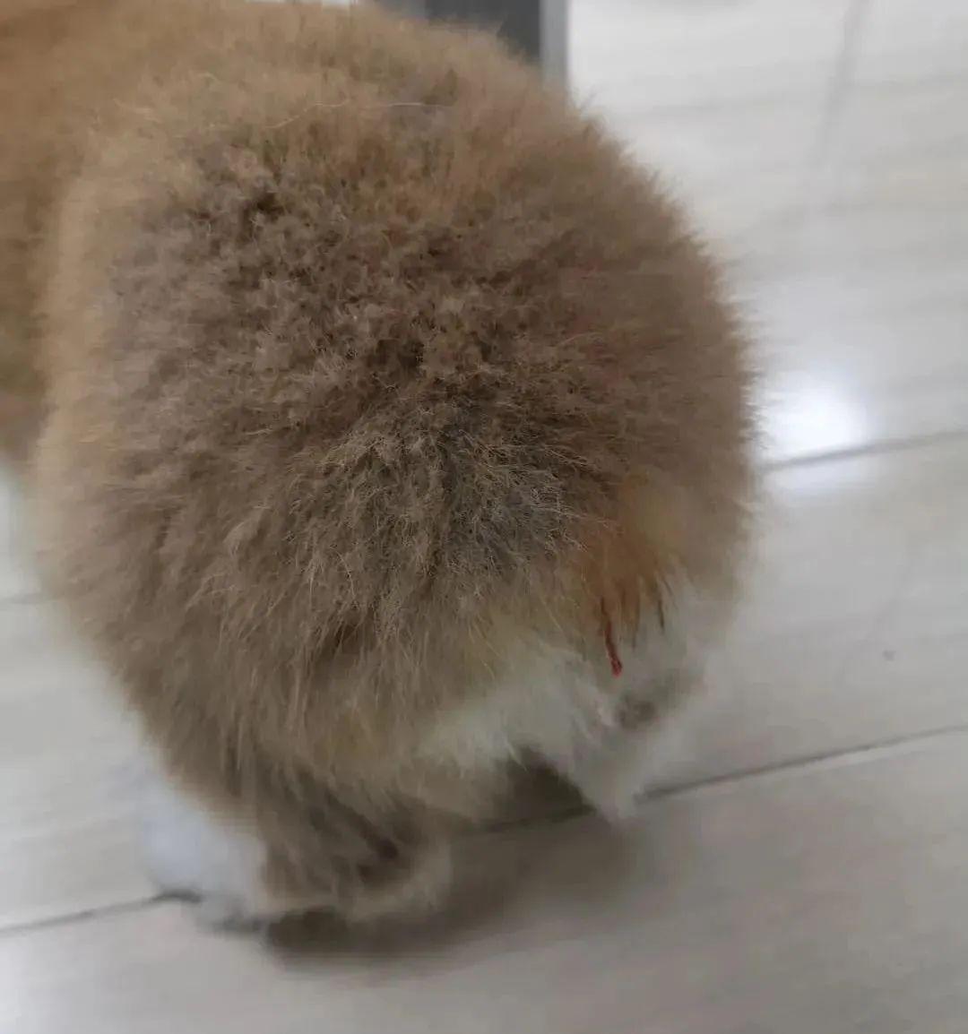 猫咪的隐形杀手犬细小【图】_猫猫健康_太平洋时尚网