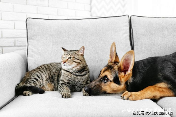 原创 怎样制止跟家里的猫咪闹矛盾?做好这13点,你也能成为个好铲屎官