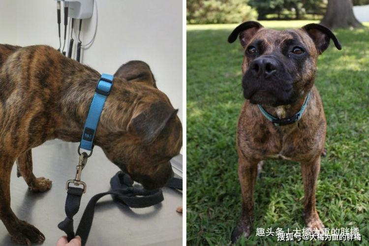 """原创 18张狗狗被收养前后的""""对比照"""",看完很不是滋味,养狗就得爱狗"""