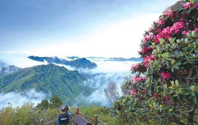 风景美如画!第八届光雾山杜鹃花节来了