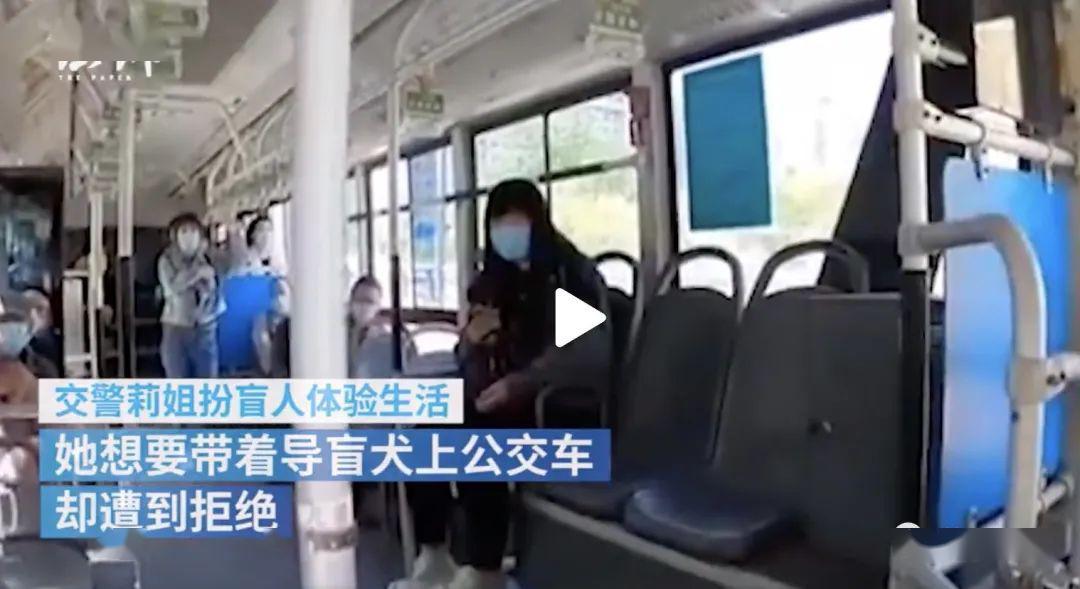 心酸!太原公交不让导盲犬上车,狗狗倒地哭泣