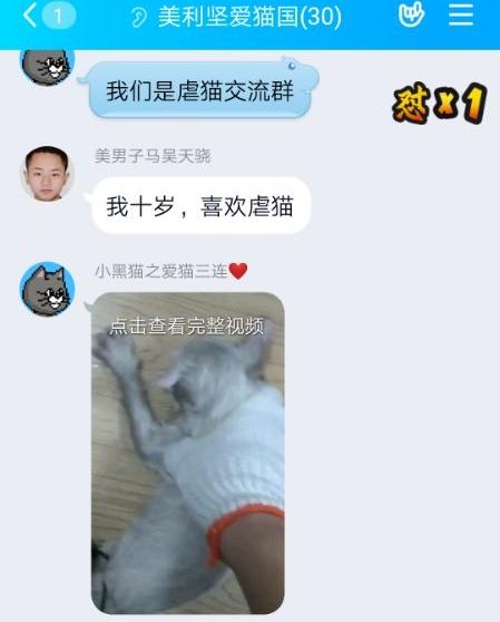 """大学生虐猫被曝光后:虐猫群微博引流,有人称""""最想虐婴儿"""""""