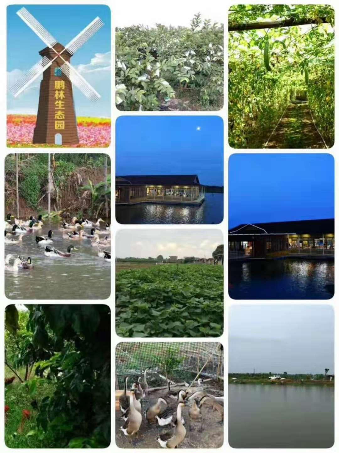 安徽黄山图片