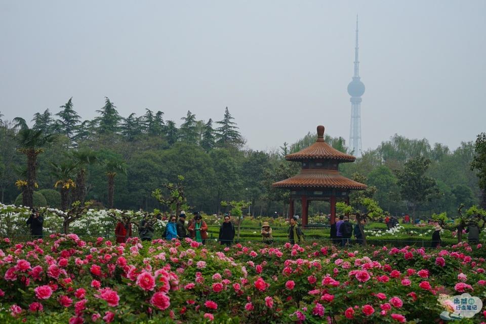 """国内最良心的牡丹观赏园,堪称""""国花第一园"""",花期门票仅需10元"""