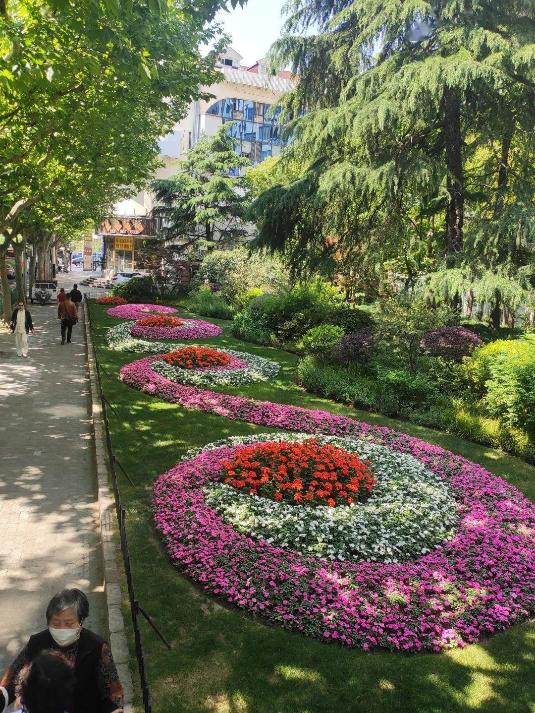 橙色天竺葵,何氏凤仙 设计理念:该花坛位于枣阳路近金沙江路路边,以花图片