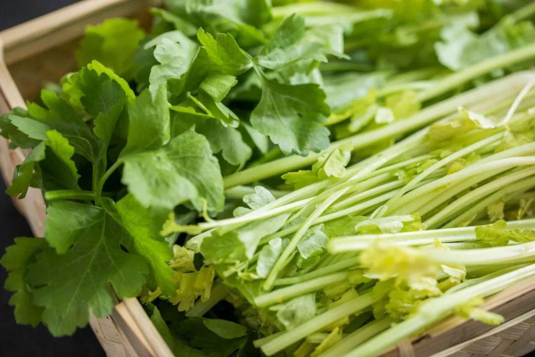 减肥能吃芹菜吗图片