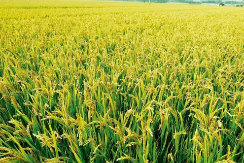 """夯实国家粮食安全根基:""""十三五""""时期粮食""""两藏""""战略有力推进"""