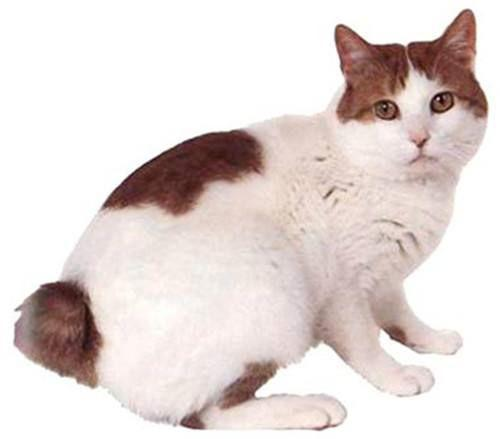 为什么日本人那么喜欢猫?
