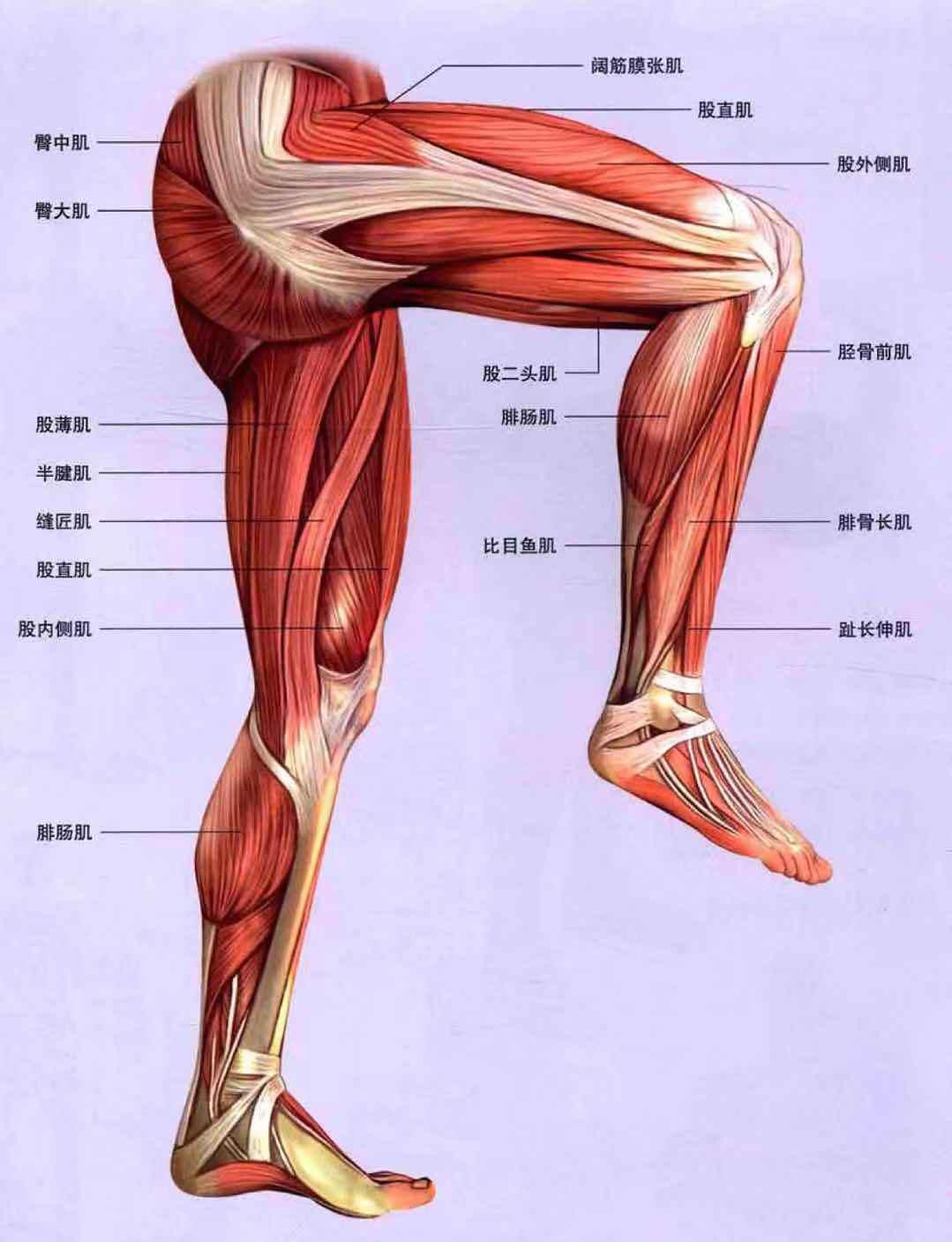 大腿锻炼方法图解