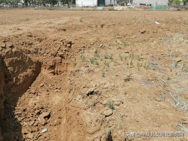 邢台县一村支书无证采伐树木被村民举报
