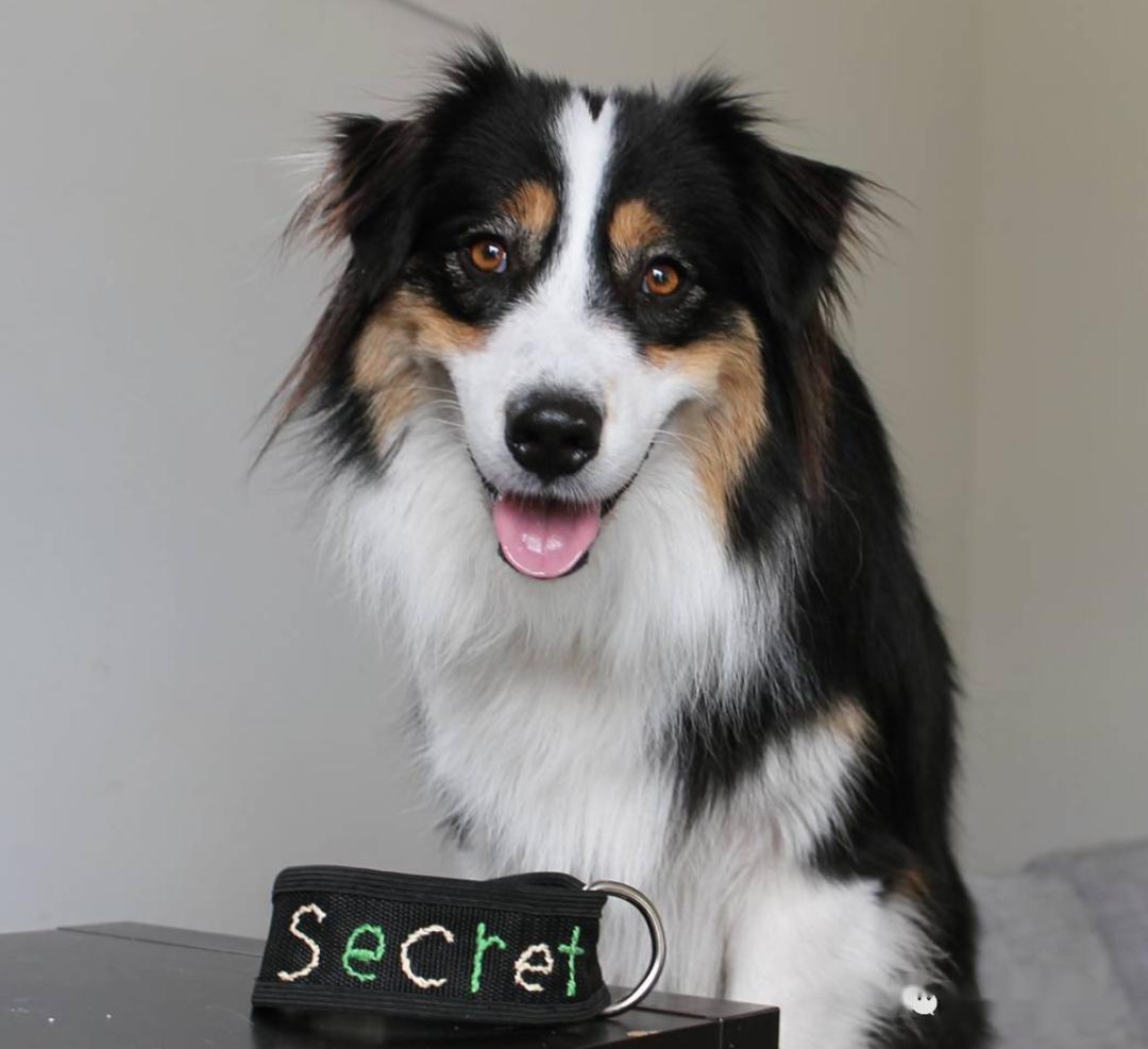 这只狗子成精了!除了启齿语言它险些啥都市!网友:我竟然不如一只狗…