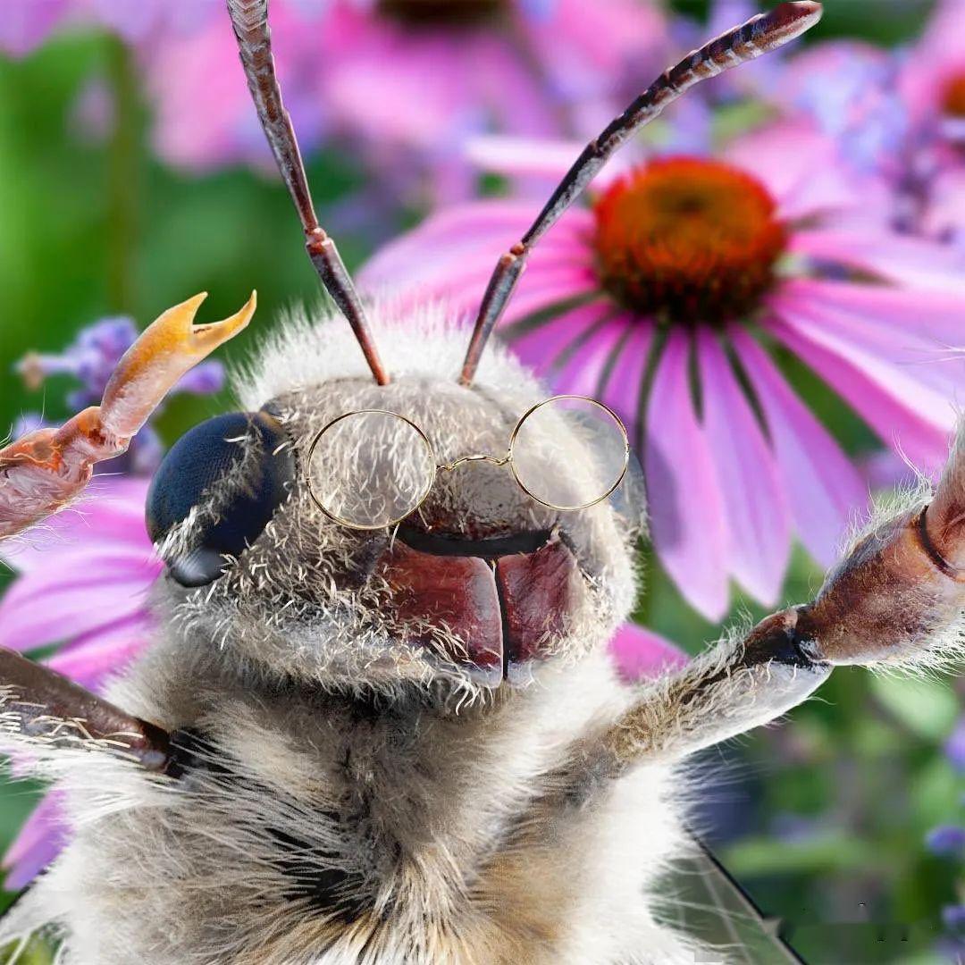 你要的世界不能沒有它,蜜蜂保護組織創意攝影展