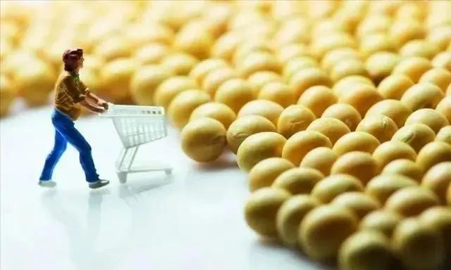 番木瓜■【新视野】这些转基因产品为何能上市