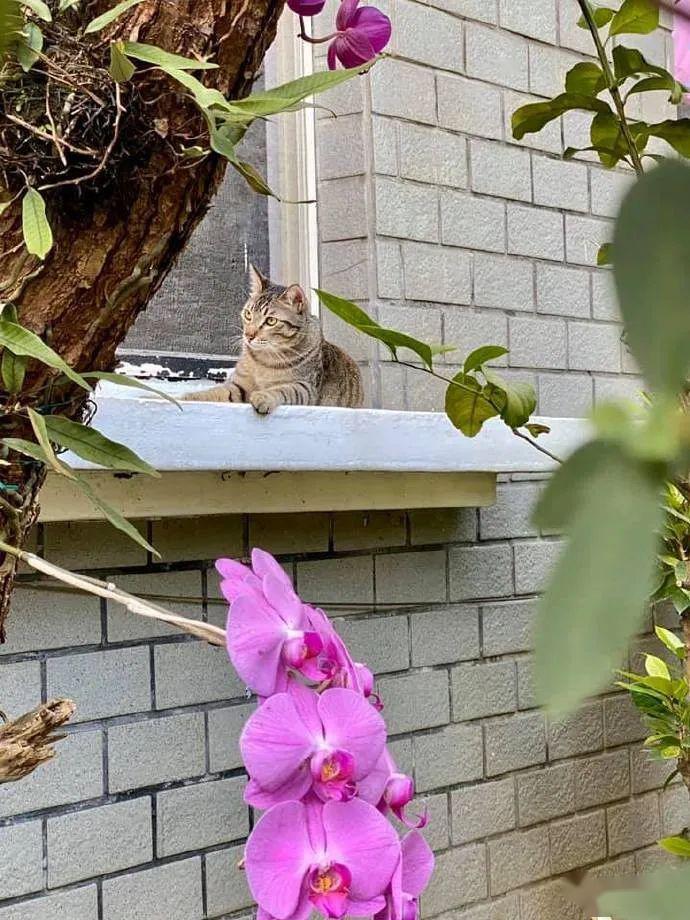 铲屎官出来散步,邂逅一只悠闲的猫咪