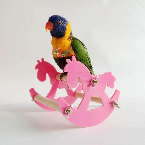 怕鹦鹉无聊?五招让爱鸟消磨时间远离抑郁症