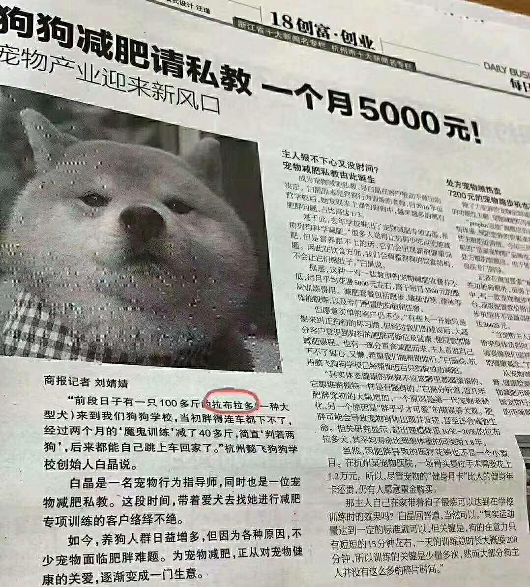 居然还有这种事!狗狗减肥请私教,一个月5000元!