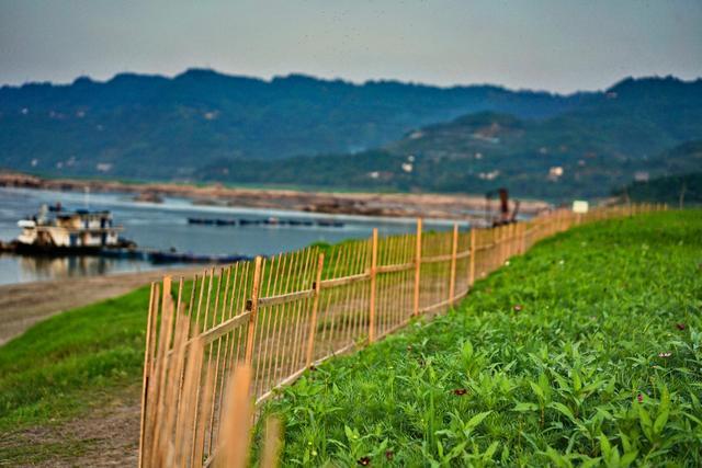 原创            重庆这片河滩一年只存在180多天,5月开满格桑花,游客蜂拥而至