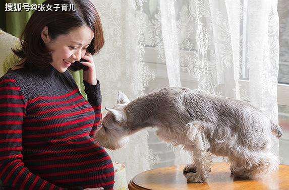 孕期真的不能养宠物么?看看专家怎么说,这才是正解,别不信
