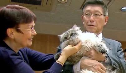 西伯利亚猫能长多大图片