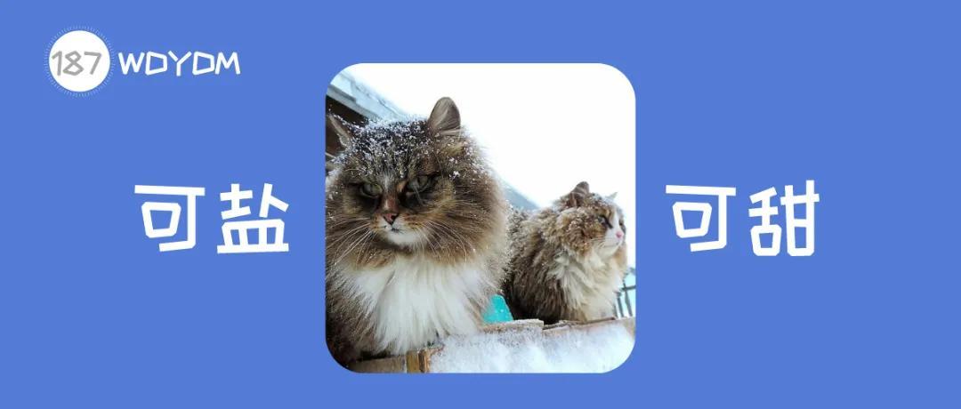 西伯利亚猫多少钱一只图片