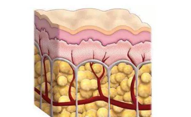 倩狐减肥干货:怎样减内脏脂肪+皮下脂肪,这个方法最见效!