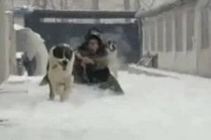 看看这网友遛狗,实力告你啥叫:皇上不急太监急!