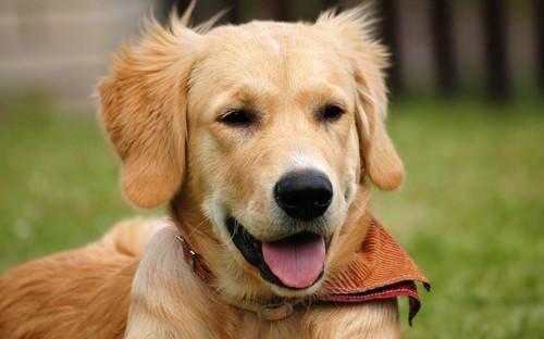 周岁之内的狗狗可以经常洗澡吗_4.狗狗不能经常洗澡,以10天左右洗一次澡为宜.