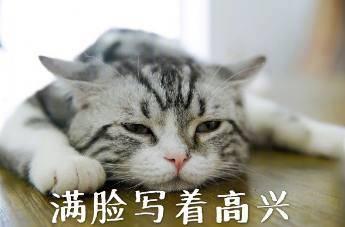 撸猫能手必备喵星拍照,猫咪行走表情包一个不浪费图片