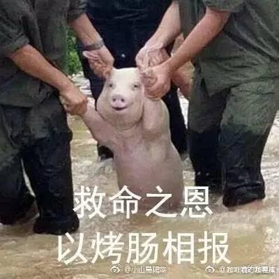 救灾中的微笑猪 | 你们救我难道是为了表情包?图片