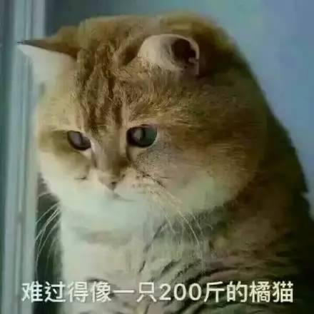 为什么要让橘猫减肥!你们懂不懂什么叫大